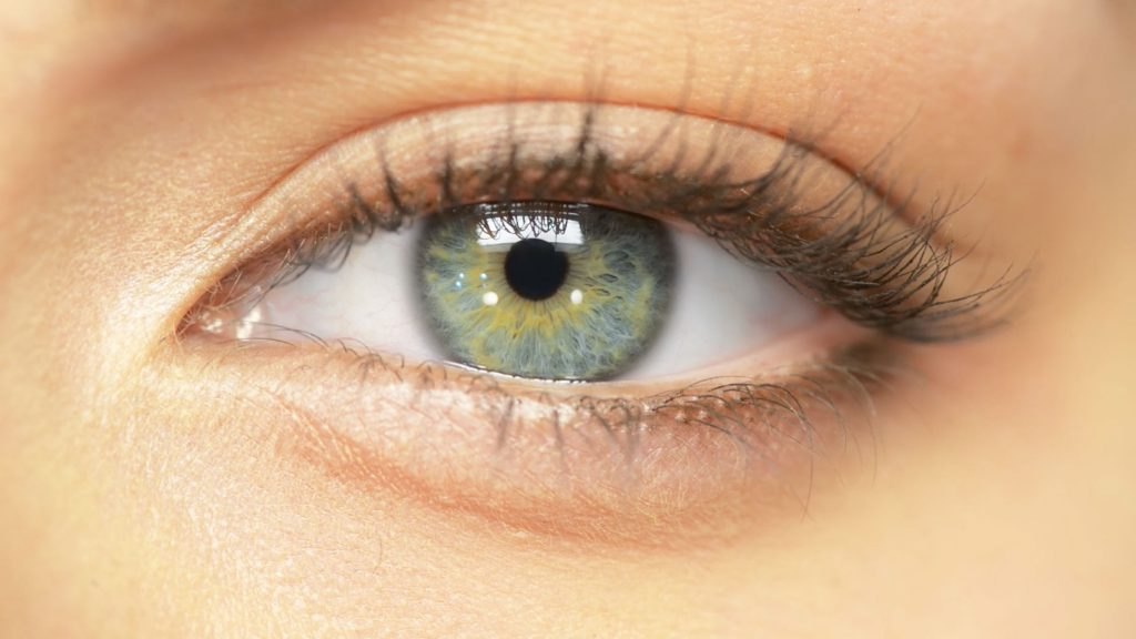 Home - Starling Eye Group - Optometrist in Gainesville, FL